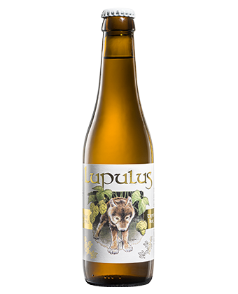 Lupulus Blonde 33cl - Tripel bier