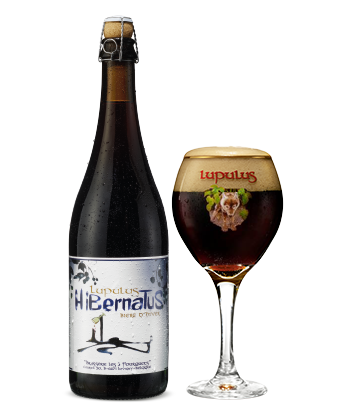 Lupulus Hibernatus - Winter Strong Ale Beer